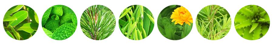 parakito after bite ingredient plants formula